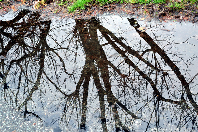 Spring Puddle Reflection CC Tobyotter